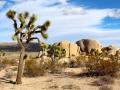 joshua-tree-national-park-mojave-desert-rocks-landscape-73820 -c- pexels